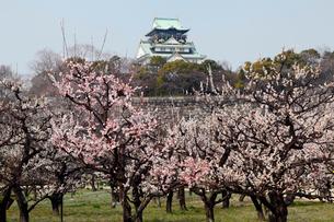 3月春 梅の大阪城 大阪の春景色の写真素材 [FYI01778844]