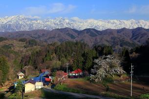 4月,残雪の北アルプスと信州小川村の満開の桜の写真素材 [FYI01778878]