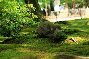 5月新緑,大原三千院のわらべ地蔵の写真素材 [FYI01778912]