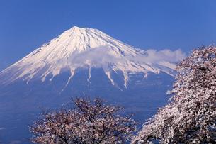 4月春,青空に映える残雪の富士山と雁公園の満開の桜の写真素材 [FYI01778922]