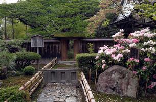 4月 シャクナゲの宝泉院 京都大原の春景色の写真素材 [FYI01778928]
