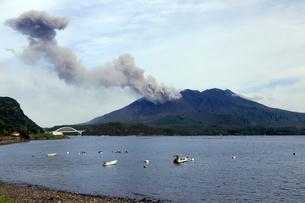 平成27年6月,道の駅「たるみず」から見た噴火する桜島の写真素材 [FYI01778936]