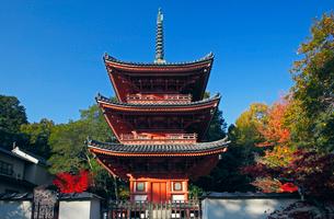 11月 紅葉の宝福寺 画聖雪舟ゆかりの寺 の写真素材 [FYI01778944]