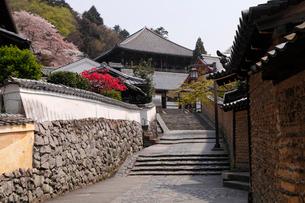 4月桜 二月堂への石段 奈良の春景色の写真素材 [FYI01778953]
