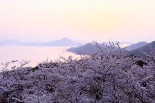4月春,桜の開山(ひらきやま)公園-しまなみ海道の桜名所-の写真素材 [FYI01778961]