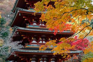 11月 紅葉の長谷寺 の写真素材 [FYI01778966]