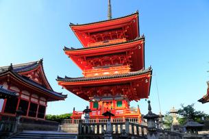 5月春,新緑の清水寺三重塔の写真素材 [FYI01778988]