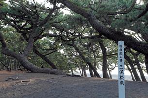 11月晩秋 三保の松原 -富士山世界遺産構成資産-の写真素材 [FYI01779001]