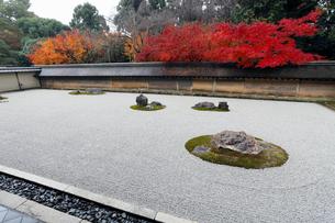 11月秋 紅葉の龍安寺石庭の写真素材 [FYI01779003]