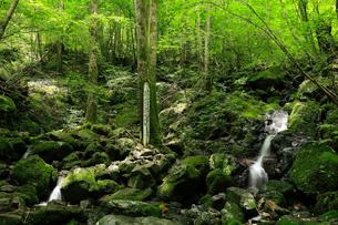 7月の四万十川源流点 四国の水景色の写真素材 [FYI01779025]
