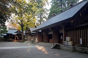 11月 秋の天岩戸神社の写真素材 [FYI01779031]