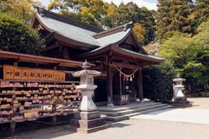 3月 春の都萬(つま)神社の写真素材 [FYI01779041]