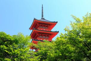 5月春,新緑の清水寺三重塔の写真素材 [FYI01779043]