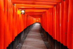 1月冬 伏見稲荷神社 京都の冬景色の写真素材 [FYI01779055]