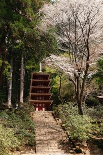 4月 桜の室生(むろう)寺 奈良の春景色の写真素材 [FYI01779065]