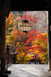 11月 紅葉の長谷寺 の写真素材 [FYI01779067]