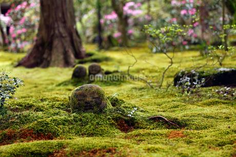 4月春 大原三千院のわらべ地蔵の写真素材 [FYI01779081]
