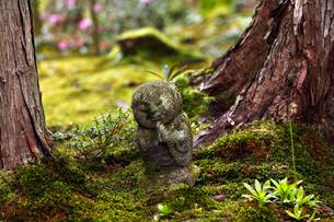 4月春 大原三千院のわらべ地蔵の写真素材 [FYI01779086]