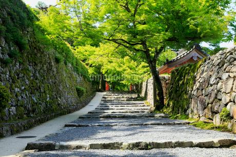 5月新緑,大原三千院の参道の写真素材 [FYI01779098]