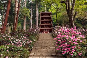 4月 シャクナゲの室生寺 奈良の春景色の写真素材 [FYI01779110]