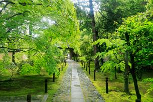 5月,新緑の鹿王院-京都嵐山の古刹-の写真素材 [FYI01779120]