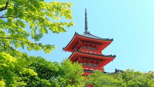 5月春,新緑の清水寺三重塔の写真素材 [FYI01779135]