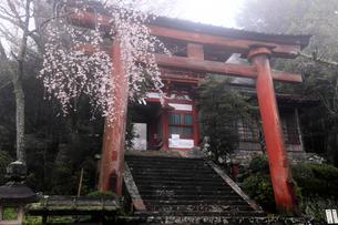 4月桜の吉野山,世界遺産の水分(みくまり)神社の写真素材 [FYI01779165]