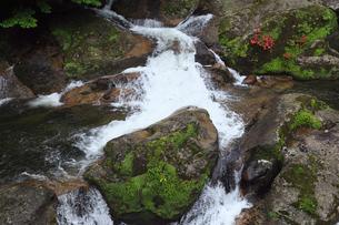 6月初夏,白谷雲水峡の白たえの滝ー屋久島の滝の写真素材 [FYI01779178]