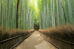 5月,新緑の竹林の道-京都嵯峨野の散策スポットの写真素材 [FYI01779186]