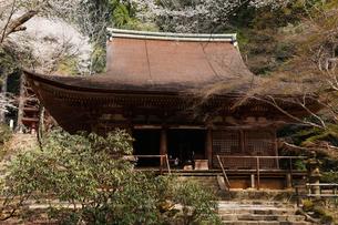 4月 桜の室生(むろう)寺 奈良の春景色の写真素材 [FYI01779198]