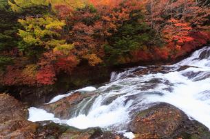 10月 紅葉の竜頭の滝奥日光の秋の写真素材 [FYI01779206]