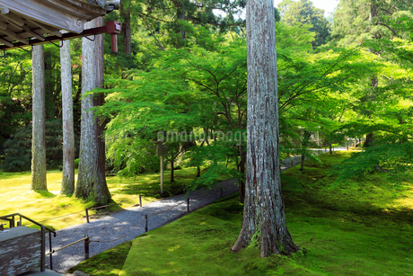 5月新緑,大原三千院の日本庭園の写真素材 [FYI01779222]