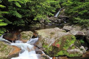 5月,白たえの滝ー屋久島の白谷雲水峡の写真素材 [FYI01779228]