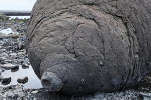 1月 天草諸島のおっぱい岩の写真素材 [FYI01779230]