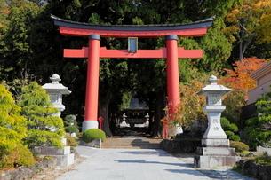 11月晩秋 紅葉の河口浅間神社 -富士山世界遺産構成資産-の写真素材 [FYI01779245]