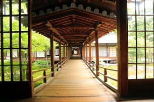 5月,新緑の建仁寺,京都の禅寺,の写真素材 [FYI01779247]