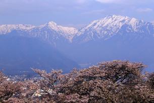 4月,信州大町から見た残雪の北アルプスと満開の桜の写真素材 [FYI01779260]