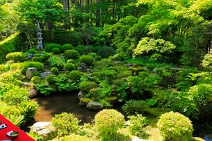 5月新緑,大原三千院の日本庭園の写真素材 [FYI01779262]
