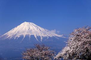 4月春 青空に映える残雪の富士山と雁公園の満開の桜の写真素材 [FYI01779273]