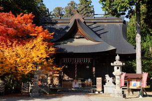 11月晩秋 紅葉の富士御室浅間神社 -富士山世界遺産構成資産-の写真素材 [FYI01779280]