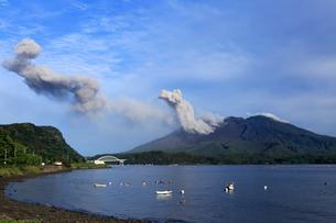 平成27年6月,道の駅「たるみず」から見た噴火する桜島の写真素材 [FYI01779287]