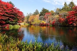 10月 紅葉の雲場池 軽井沢の秋の写真素材 [FYI01779300]