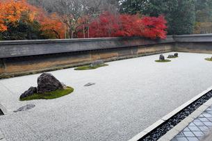 11月秋 紅葉の龍安寺石庭の写真素材 [FYI01779311]