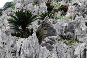 2月 沖縄の金剛石林山-日本唯一の亜熱帯カルストの写真素材 [FYI01779327]