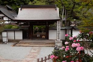 4月 シャクナゲの室生寺 奈良の春景色の写真素材 [FYI01779333]