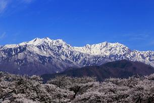4月春 信州大町から見た残雪の北アルプスの写真素材 [FYI01779334]