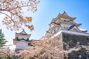 桜咲く伊賀上野城の写真素材 [FYI01779335]