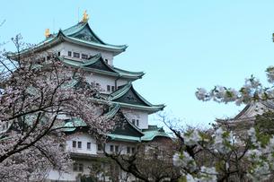 桜の名古屋城天守閣の写真素材 [FYI01779343]