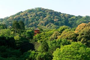 5月春,清水の舞台から子安塔を見る-新緑の清水寺-の写真素材 [FYI01779364]