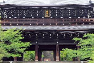 5月,新緑の知恩院,京都の禅寺,の写真素材 [FYI01779378]